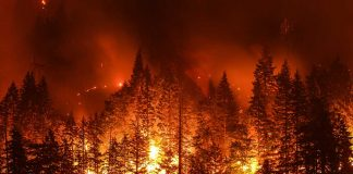 Federal Judge Issues Emergency Order Over Wildfires