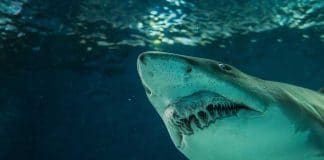 Police Discover Shark-Infested Pool Inside Home